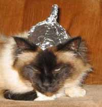 Click image for larger version.  Name:cat-in-tin-foil-hat (1).jpg Views:46 Size:19.1 KB ID:54895