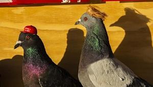 Click image for larger version.  Name:PUTIN-supplied-pigeons-maga-hat-1120.jpg Views:2 Size:88.3 KB ID:100248